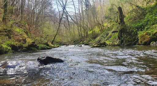 Rivière de début d'année