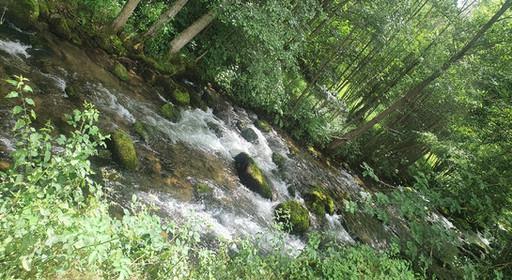 Rivière de sous bois