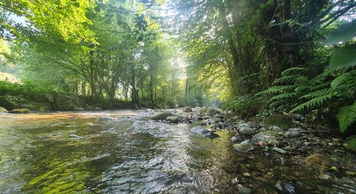 Petite rivière de piémont