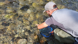 Ramasser ses larves aquatiques