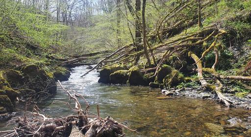 Rivière encombrée