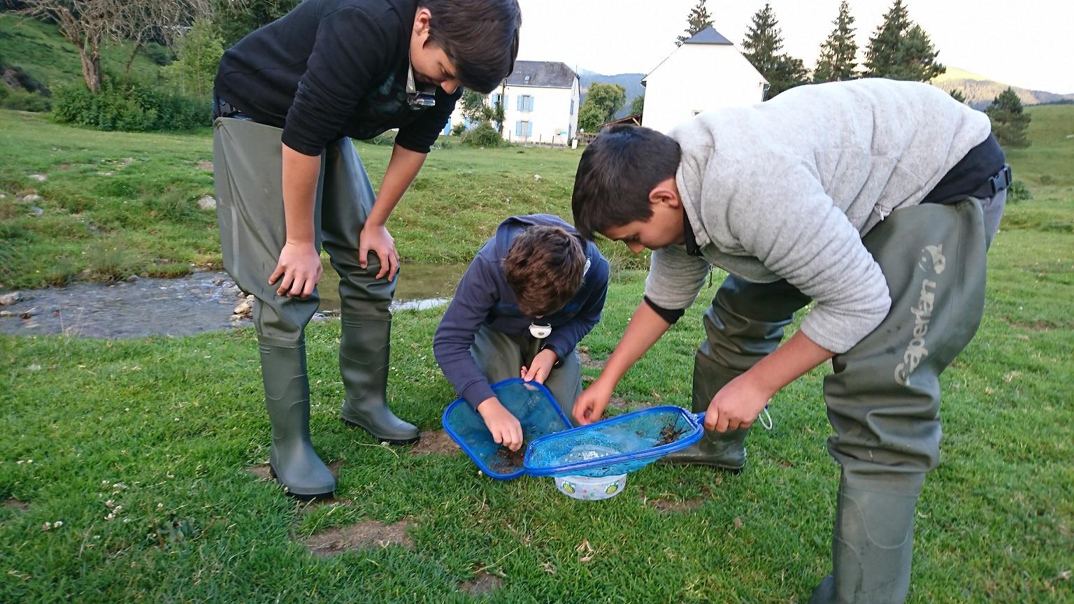 Etude des larves aquatique