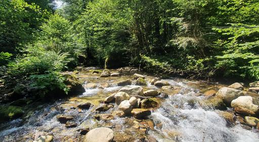 Ruisseau 1000m d'altitude