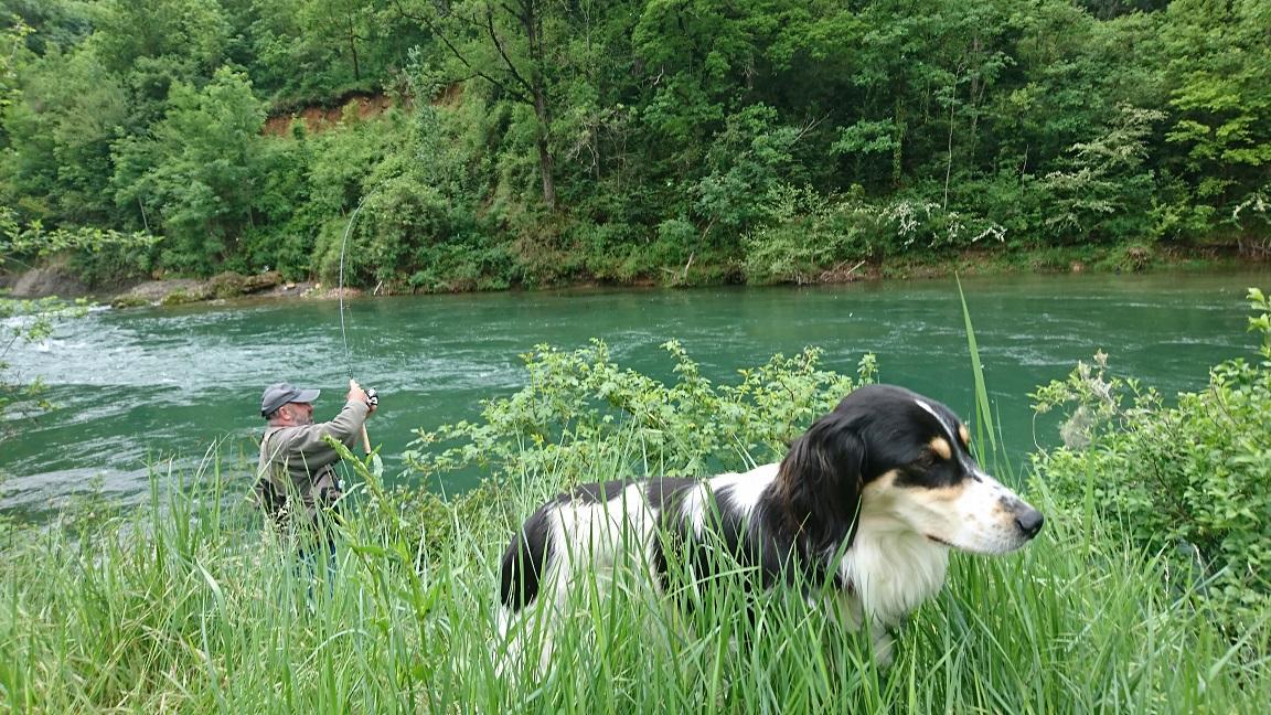 Fario notre chienne de pêche