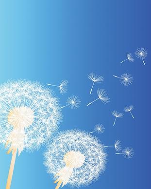 dandelion-background-4519897_1920_edited