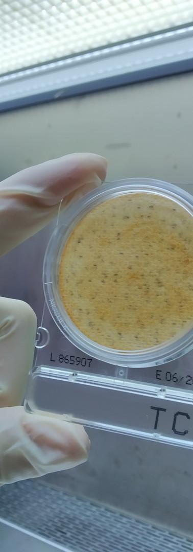 食品微生物實作照片3.jpg