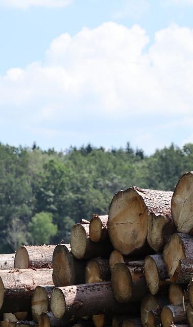 天然木材.jpg