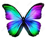 16911901-Morpho-colorful-butterfly-isola