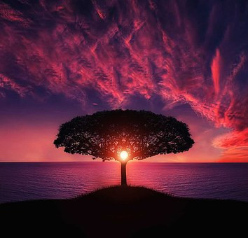 tree-736885__340.jpg