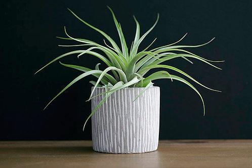 Concrete Planter - Trunk