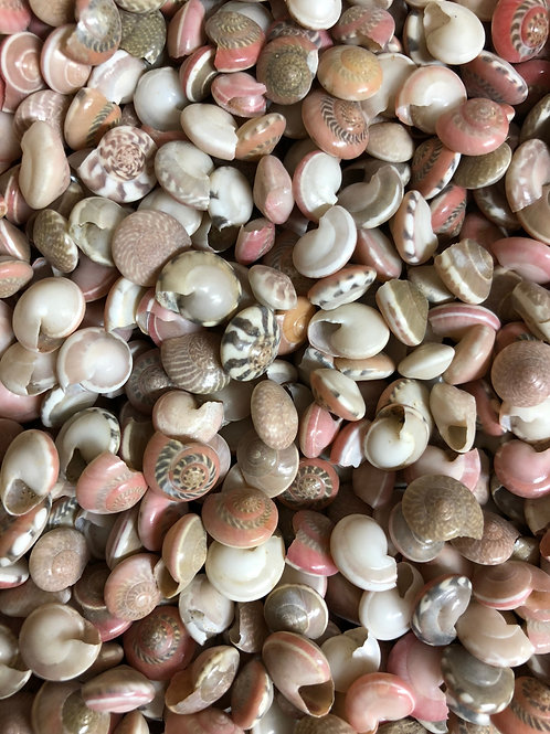 Tiny Pink Shell Mix