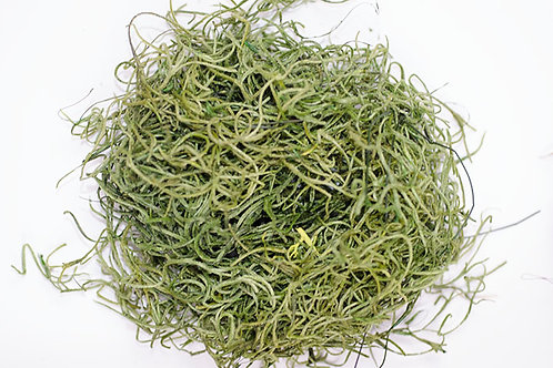 Dried Spanish Moss - Green