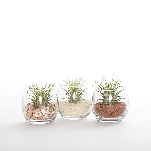 Tiny Terrarium Kit - 3 Pack