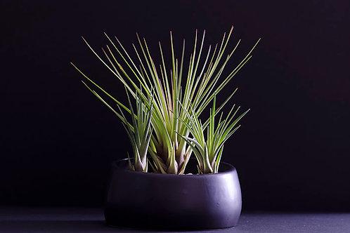 Angled Minimalist Pot