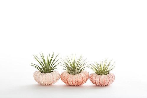 Trio of Mini Sea Urchin Planters