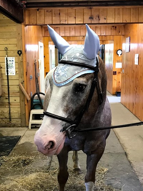 Light Blue Horse Bonnet