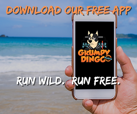 Run Wild Run Free Download APP (1).png