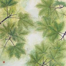 Swifts Flying Green Maple Ms. Emily LAW 2020 70 x 140 cm