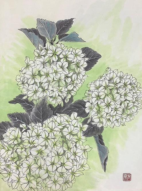 White Hydrangea 白球 #EL01