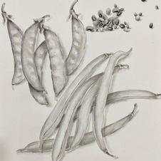 Precious Food - Beans Ms. Emily LAW 2020  28 x 35 cm