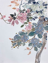 Bougainvillea and Crepe Myrtle 雙色簕杜鵑與紫薇 #MCP08-03