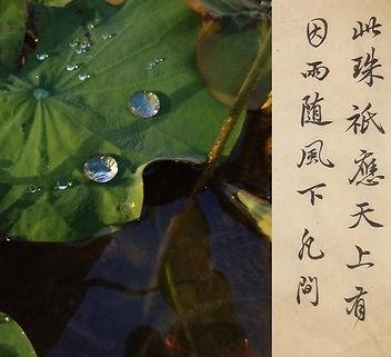 Lotus water.jpg