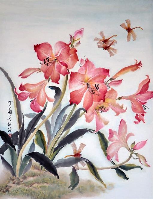 Dance in the Garden 朱頂蘭 #MY005