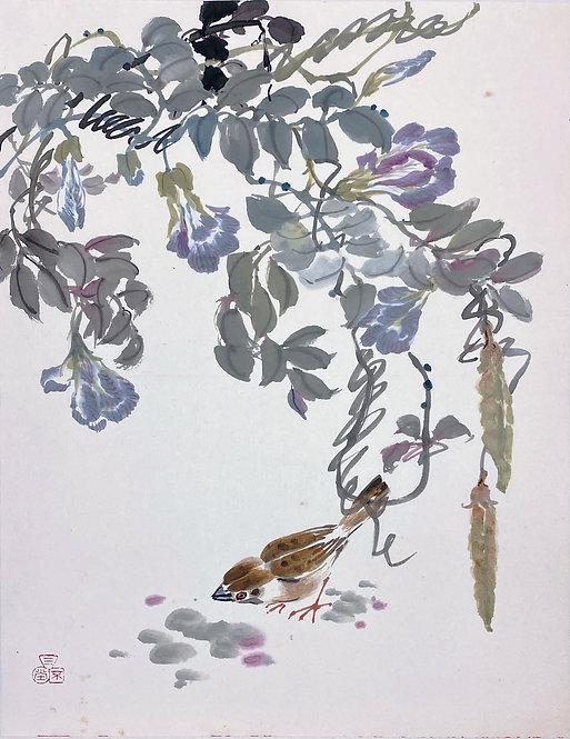 Pigeonwings and Sparrow 蝶豆花與麻雀 #MCP08-09
