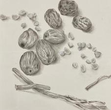 Valuable Food - Dates Ms. Emily LAW 2020  28 x 35 cm