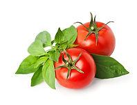Basil & Tomatoes