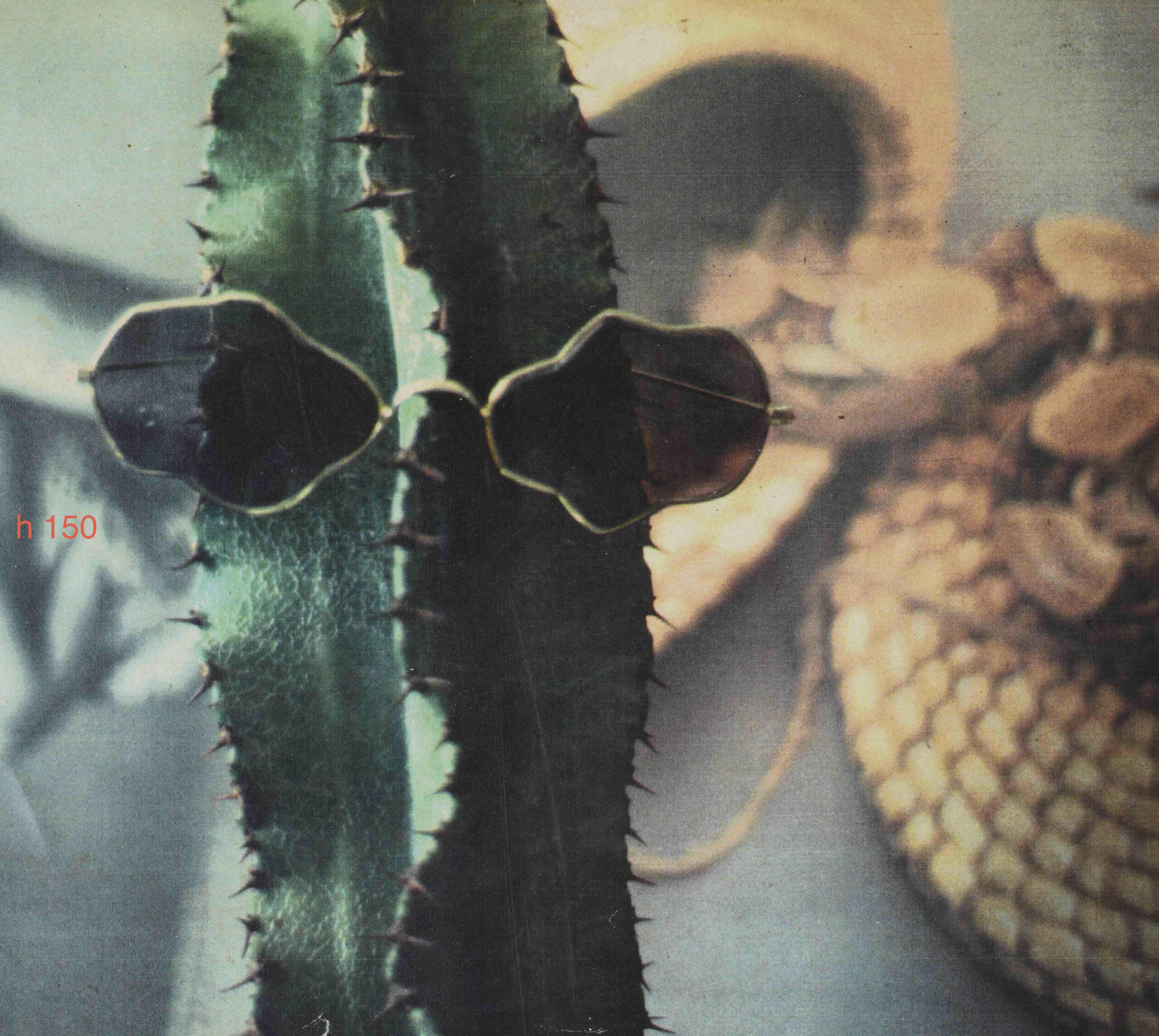 foto cactus formato h 150cm 1988