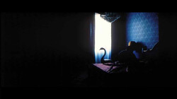 imbalsamatore foto film (12)