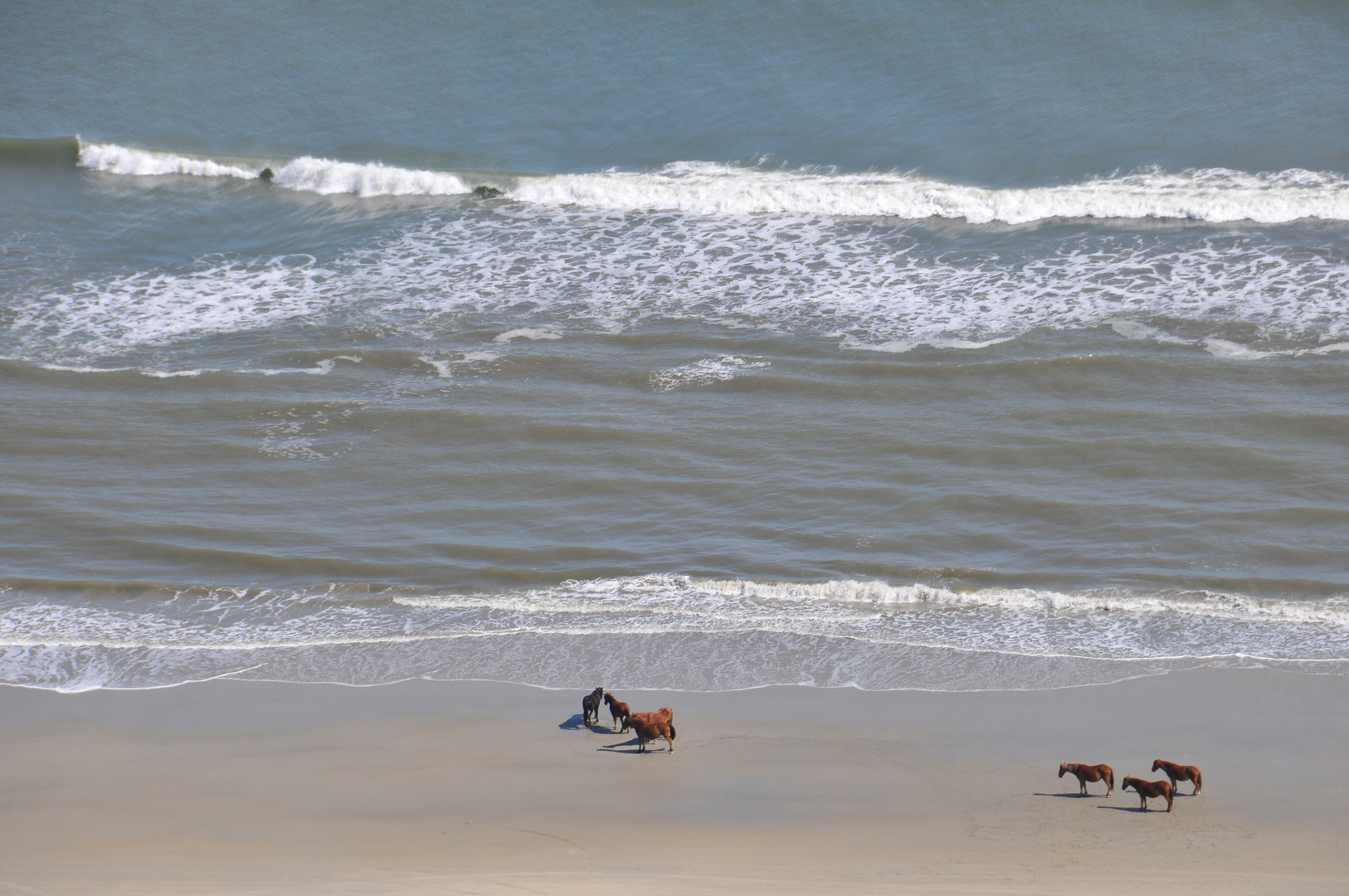 horses on beach too.JPG