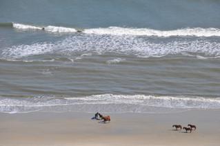 horses on beach too.JPG