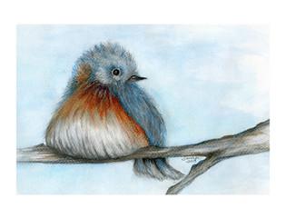 Fat Bluebird