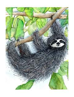 Sloth Days