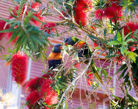 May 2021 - Lovebirds