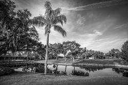 Florida Bliss