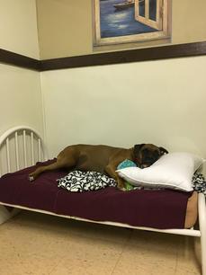 ccbb sleeping in.jpg