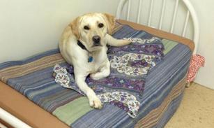 ccbb dog bed.jpeg