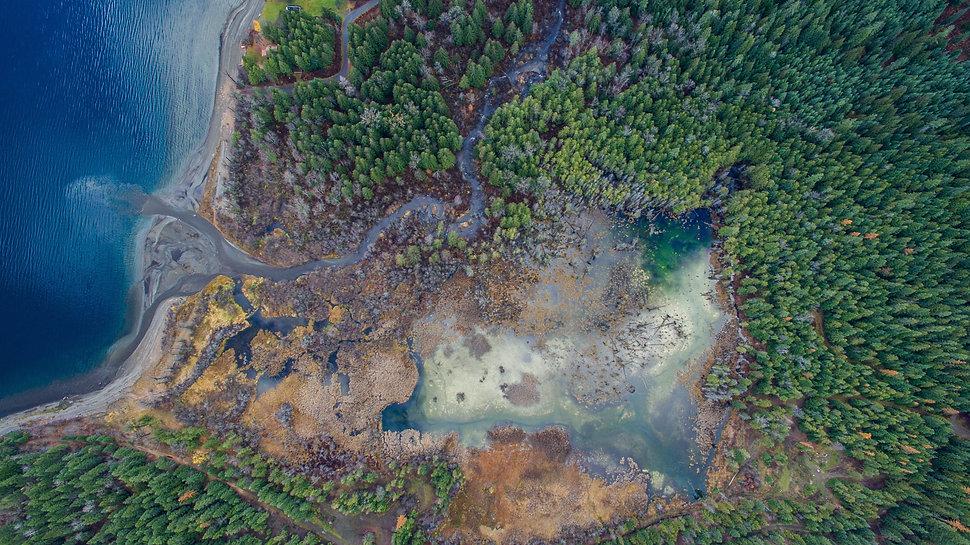 drone marsh 9.jpg