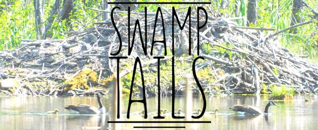 SwampTails.png