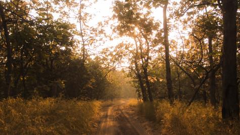 Charming morning rays