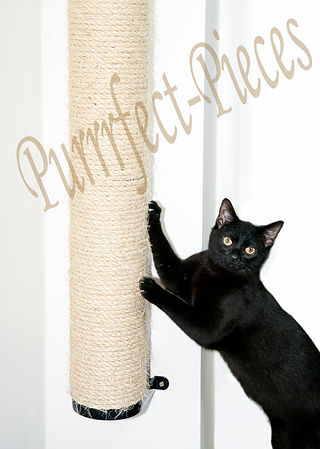 Voted The Uk S Best Cat Scratching Post By Independent