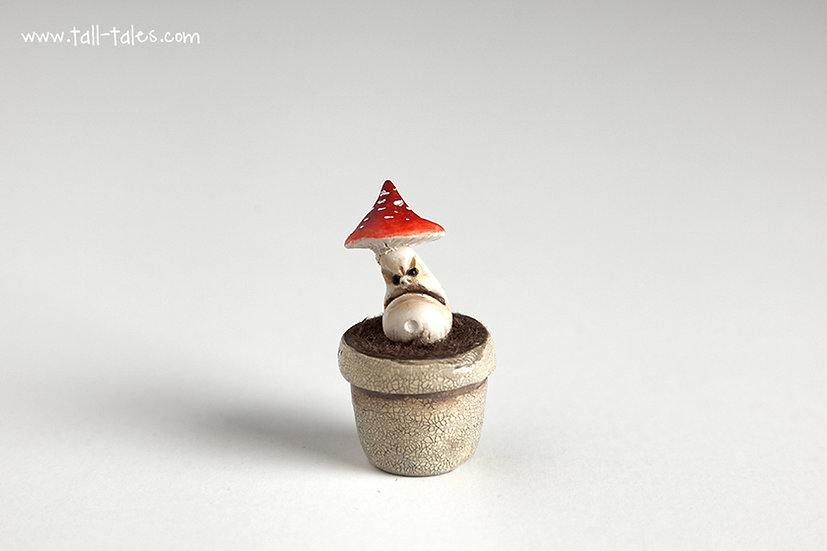 Potted Face Toadstool - D