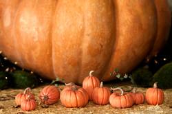 Fairytale pumpkins