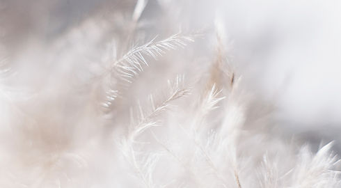 Macro shot of White Feather_edited.jpg