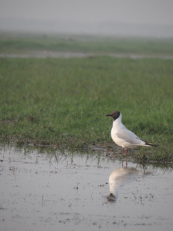 Nature sauvage et nombreux oiseaux