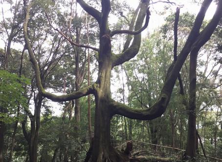 わたしはぶどうの木、あなたがたはその枝である