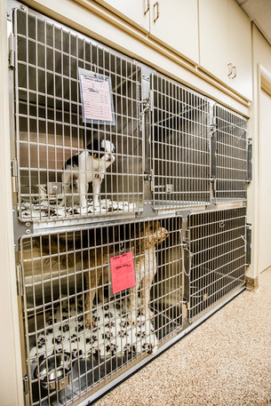 Canine Ward - Cage bank